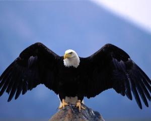 Sejamos todos dignos, fortes e abençoados pelo Senhor, como as Águias!